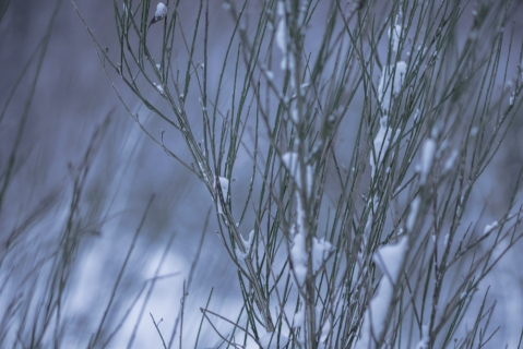 flakes (1 of 8)