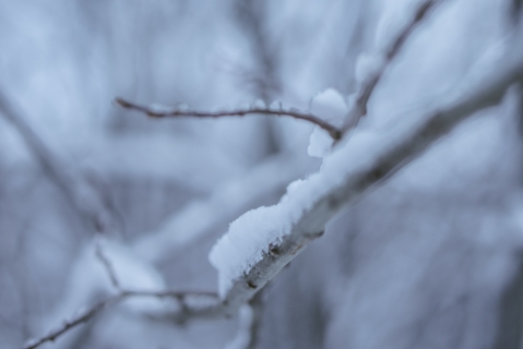 flakes (3 of 8)