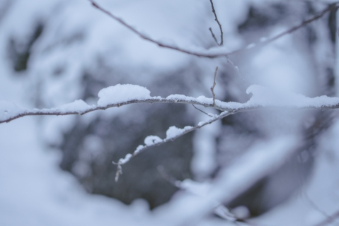 flakes (4 of 8)